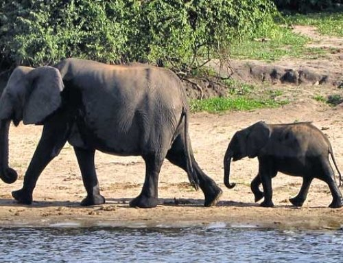 Botswana – will elephants and diamonds decide the winner of the elections?